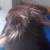 Profielfoto van Miemsie
